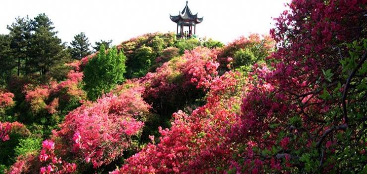 武汉到麻城旅游 麻城龟峰山一日游