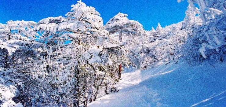 南京到昆明 元谋土林 轿子雪山 红土地6天深度游