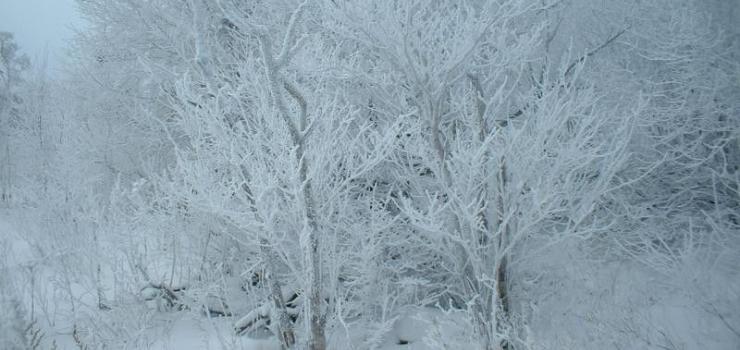 深圳到东北.山东旅游线路 哈尔滨亚布力滑雪.山东青岛旅游七天四飞品质团