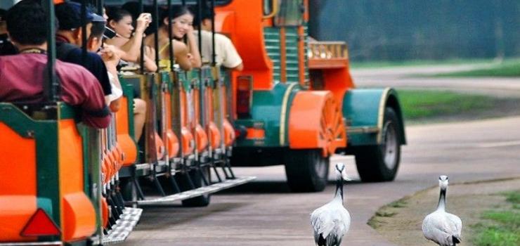 广东大学城、广东科学城、长隆、大马戏双卧五日游
