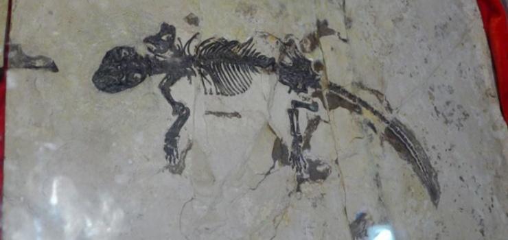 中国古生物馆_