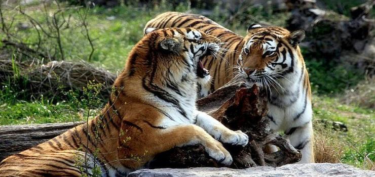 动物园图片/照片_图片