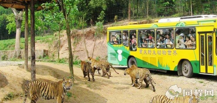 重庆野生动物园图片/照片