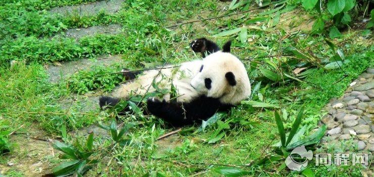 桂林动物园图片/照片_图片