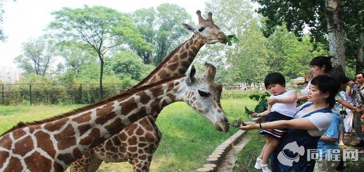 济南动物园图片/照片_图片_济南动物园_景点_济南旅游