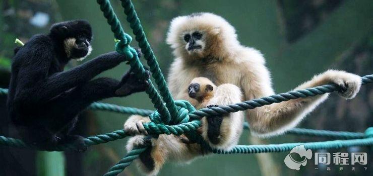济南动物园图片/照片_图片