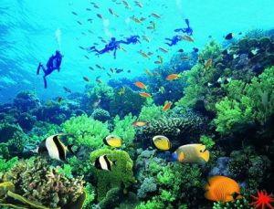 三亚潜水|去三亚亚龙湾潜水|亚龙湾西排远海潜水