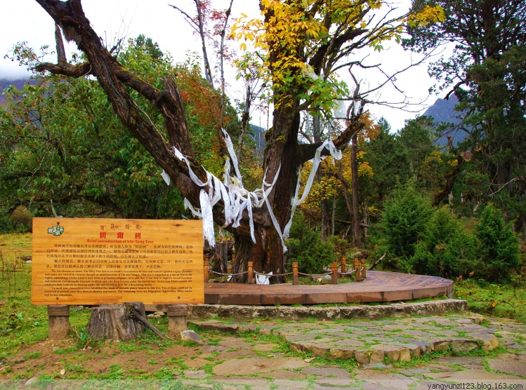 西藏单飞单卧九日游西安国旅
