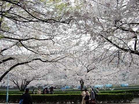 苏州出发日本富士山南线温泉美食赏枫6日游(无小费含自费)