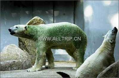 泰国旅游:曼谷、鳄鱼湖、大皇宫玉佛寺、芭提雅7日旅游