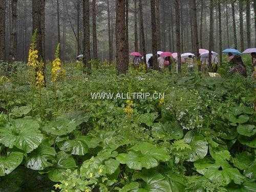 汉中红寺湖、武侯祠、石门栈道+油菜花二日游