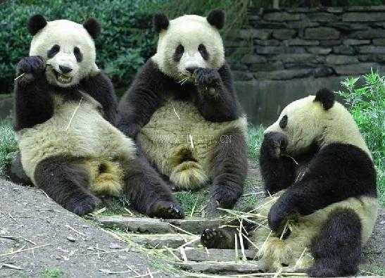 重庆动物园图片/照片_图片_重庆动物园_景点_重庆旅游