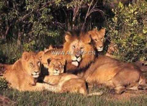 大兴野生动物园图片/照片_图片_大兴野生动物园_景点