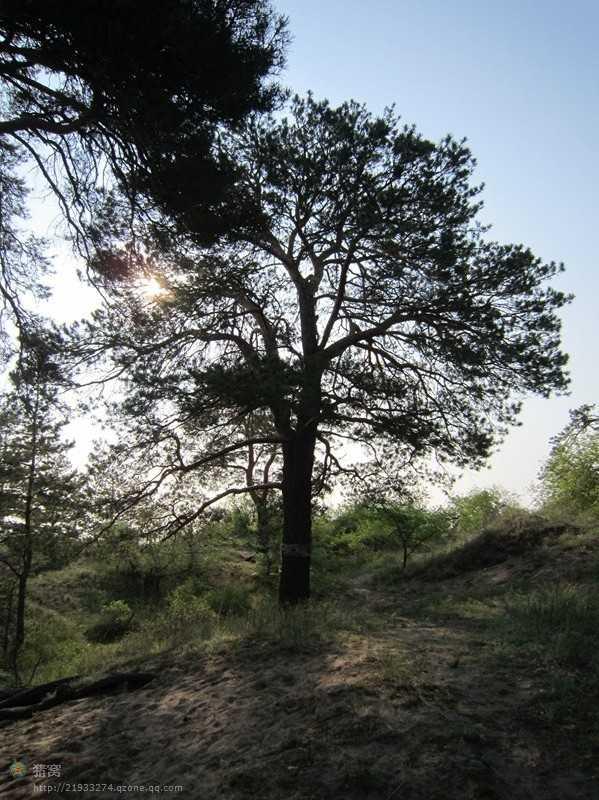 私人定制草原散客拼团_西山国家森林公园_根河湿地一日游
