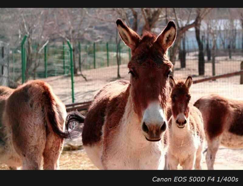 青藏高原野生动物园图片/照片