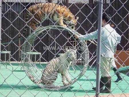 苏州到上海野生动物园旅游线路:4月苏州出发到上海园