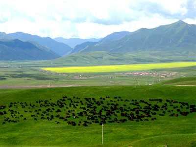 精品自然景观线:焉支山、山丹军马场万顷油菜花一日游