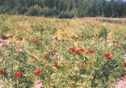 呼伦贝尔大草原、满洲里、俄罗斯民族乡恩和尊享三日游