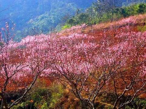 东莞到惠州天然温泉、小楼人家、香溪古堡、增城绿道、白水寨仙瀑二天游