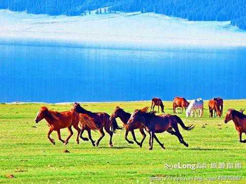 新疆花海-(端午节)伊犁环线9日品质游