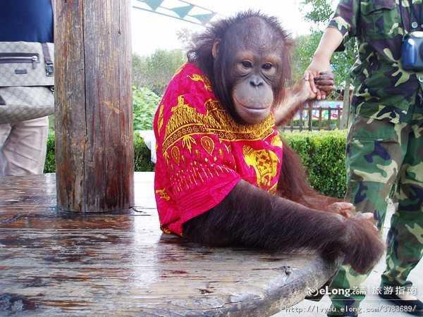 春节宁波到杭州野生动物园