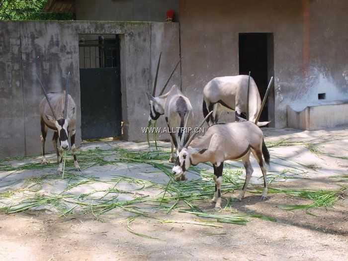 广州动物园景点介绍