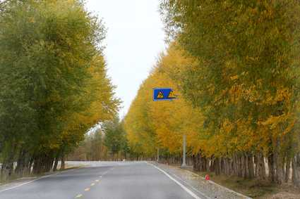 十月一去最美的胡杨林、额济纳旗、七彩丹霞张掖双卧8天旅游