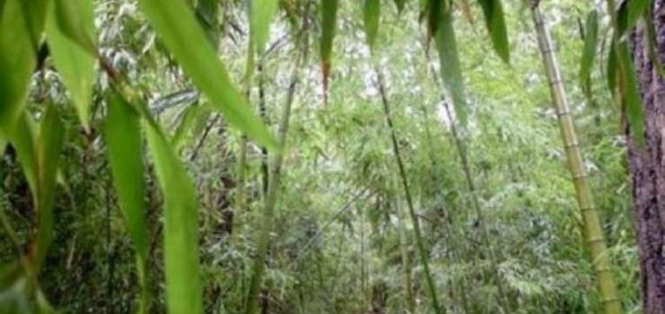 日照森林公园、竹洞天、刘家湾双卧5日游(全程1个购物店)