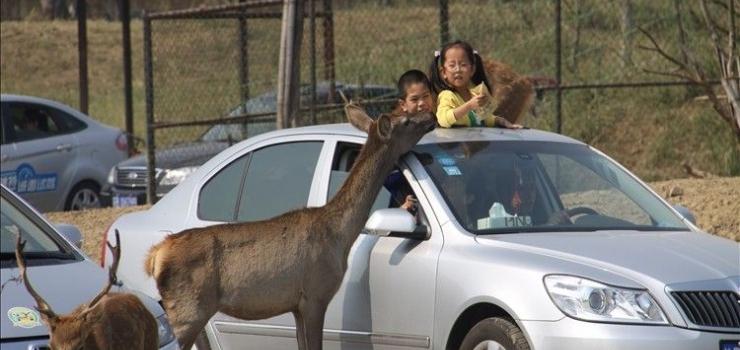 苏州乐园、周庄水乡、上海外滩、上海野生动物园三日游