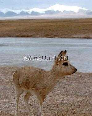 情迷西藏--林芝风情游