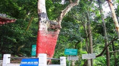 广东求姻缘灵的寺庙 含许愿树   深圳本地宝