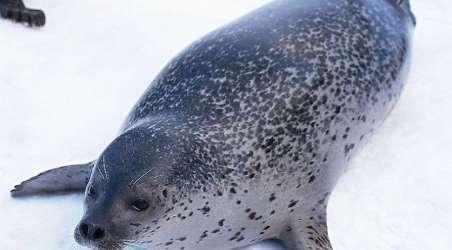 【南湖冰川动物冰雪嘉年华】沈阳南湖冰川动物冰雪