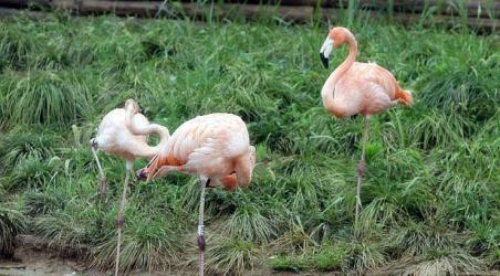 【扬州动物园】扬州扬州动物园门票价格