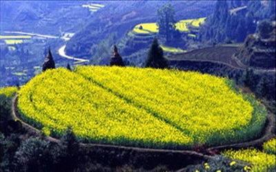南华山风景区介绍:   南华山风景区位于海原