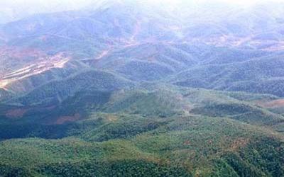 菜阳河自然保护区植被丰富