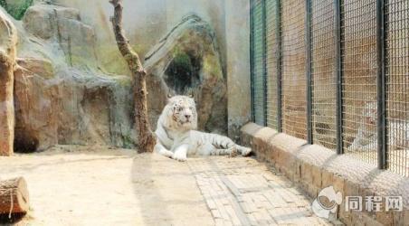 【济南动物园】济南济南动物园门票价格