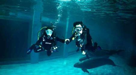 【青岛极地海洋世界欢乐剧场潜水体验】青岛青岛极地