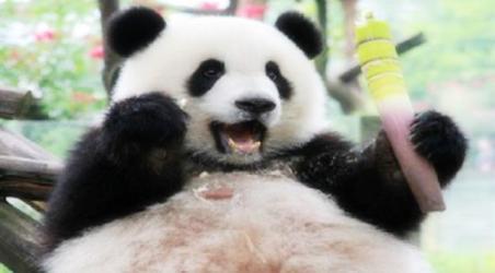 【重庆市动物园】重庆重庆市动物园门票价格