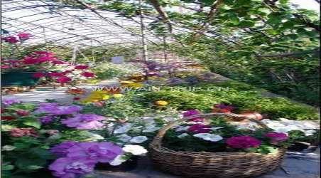 【百雀林生态观光园】青岛百雀林生态观光园门票价格