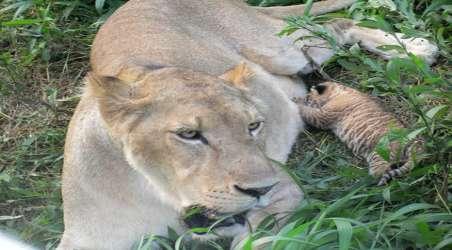 【深圳市野生动物园】深圳深圳市野生动物园门票价格