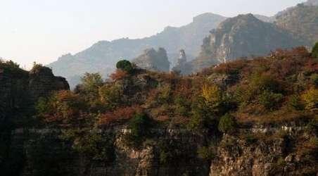 大黑山岛上的蝮蛇数量和密度比不上大连老铁山