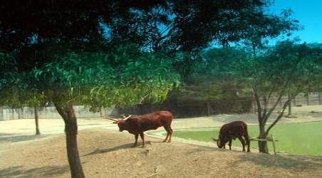 陕西野生动物图片大全