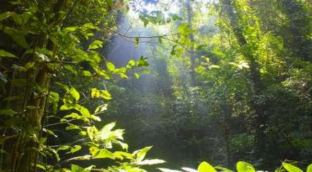 【莫里热带雨林】德宏莫里热带雨林门票价格