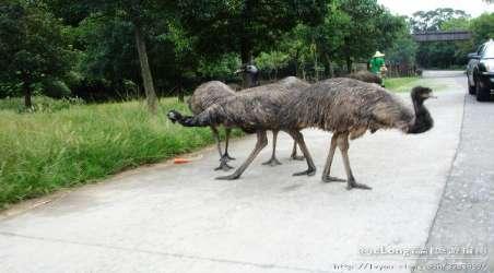 【野生动物园】杭州野生动物园门票价格