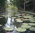潘波莫西斯花园