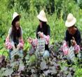 台南-仙湖休闲农场精致单人美食体验一日券