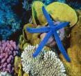 (福建厦门)海底世界