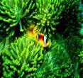 (澳大利亚凯恩斯)大堡礁