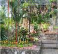 (泰国清迈)兰花园