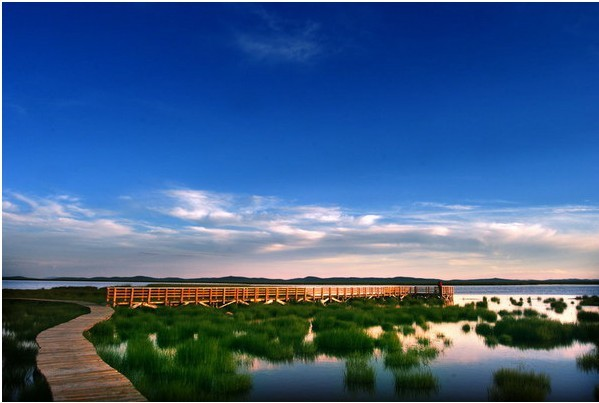 美丽的甘南湿地